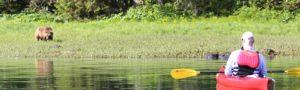 Kayaking with bears on shore - Alaska Inside Passage